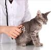Ветеринарные клиники в Абатском